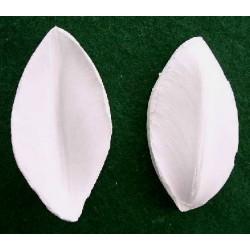 Tulpan (bladveiner),  2 st