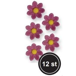 Prästkrage, ca 12 st (lila)