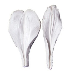 Alstroemeria L, 2 st bladnersmarkörer