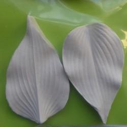 Hosta, silikonveiner (6017)