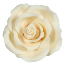 Ros - Ivory, sockerblomma (L)
