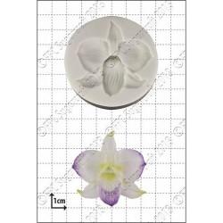 Dendrobium, silikonform